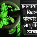 झालावाड़ में किडनी फेल्योर का आयुर्वेदिक उपचार